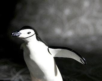 Penguin - Photograph - Various Sizes