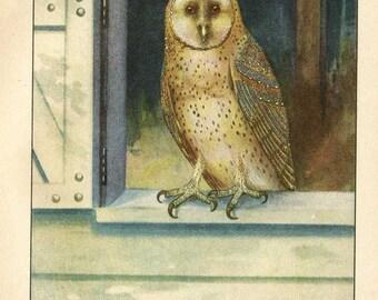 Vintage 1927 American Birds Original Bookplate Illustration, Print, Barn Owl, Bird Outdoor Scene Print, Wall Decor,