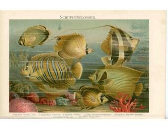 1894 ANTIQUE FISH LITHOGRAPH - original antique print -  fish ocean scene sea print