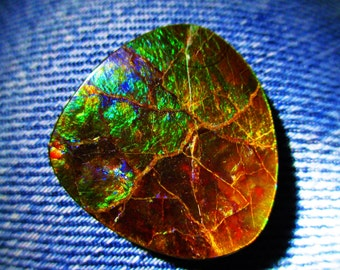 WHOLE LARGE Cut Ammolite Glowing Mineral Lapidary Gem - 5th Element Akasha, Protection, Charisma, Energy Flow, Clarity, Personal Power