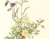 1959 Alpine Flowers, Scheuchzer's Bellflower, Mountain Avens, Alpine Aster Vintage Lithograph