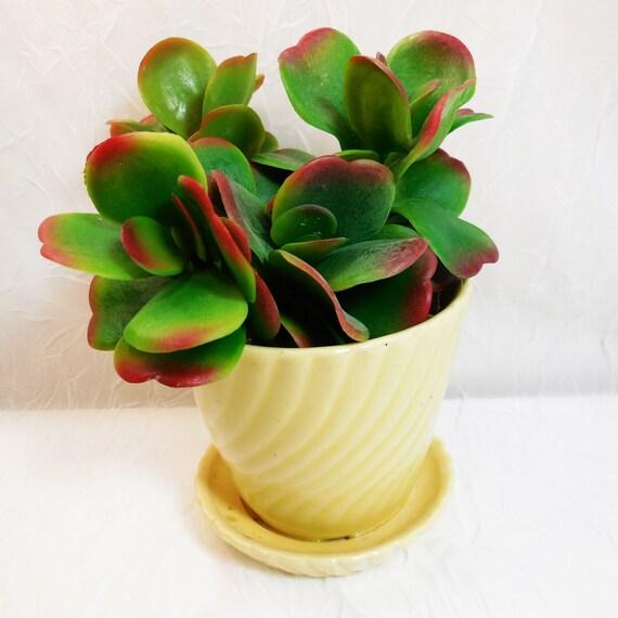 Vintage Yellow Swirl Pattern Flower Pot Brush Pottery