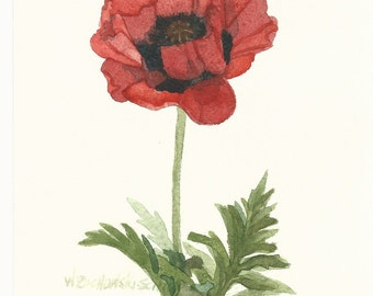 Red Poppy Original Watercolor 3