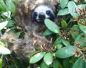 Sloth  sew you own one by Furry Critters  , ebook 63 pages how too  and pattern