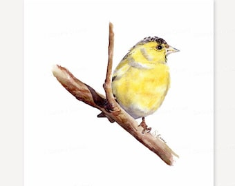 Original Bird Watercolor Painting. Yellow Siskin bird illustration. Woodland Rustic home decor wall art, Birdwatching gift. 8x8 art