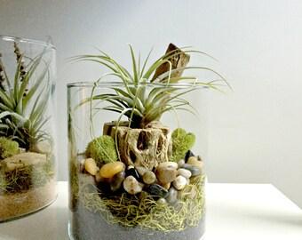 Air plant terrarium - glass vase Living decor DIY kit - gift for any occasion- cholla wood decor Zen decor