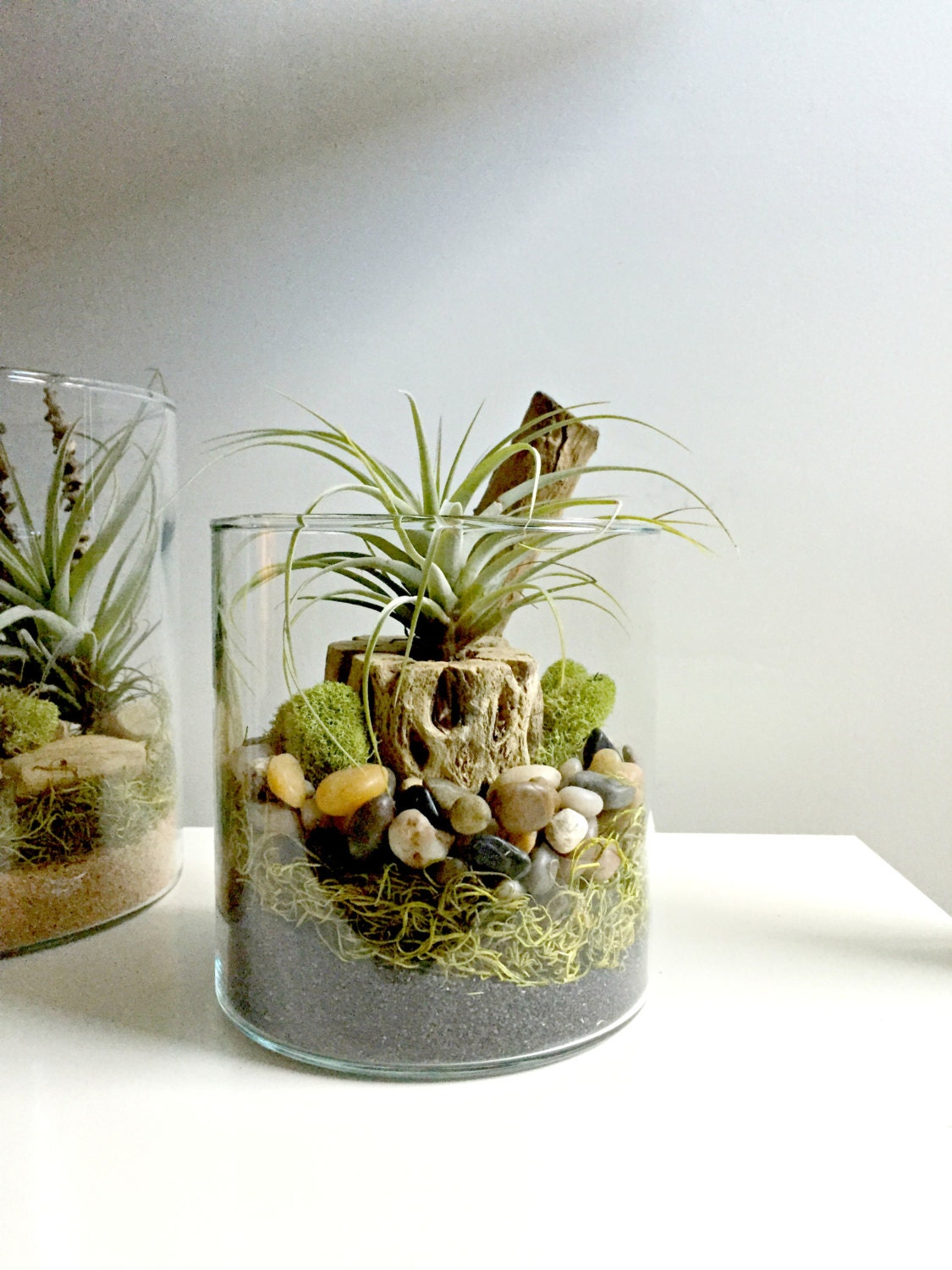 air plant terrarium glass vase living decor diy kit gift. Black Bedroom Furniture Sets. Home Design Ideas