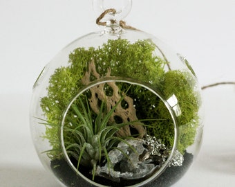 Hanging Terrarium with Airplant, Geode, and Pyrite || Small Round