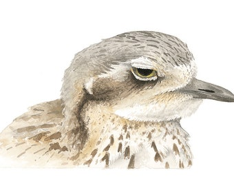 Bush-stone Curlew Original Watercolour Avian Faces Series 10/12