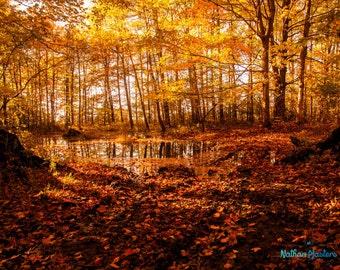 Autumn Landscape - Fine Art Photography. Nature Photography. Garden Photography. Office Decor. Home Decor. Wall Art.