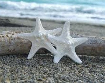 Bulk White Knobby Starfish - Wedding Beach Decor Coastal Decor and Supplies for Floral and Photo Shoot Prop Accessories