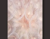 Dandelion photography print, flower photography, minimalist photo print, botanical art print, pale pink abstract art, flower photo print