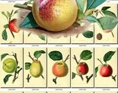 FRUITS VEGETABLES-1 Collection of 143 vintage images pictures High resolution digital download printable pineapple grapes apples grapefruit
