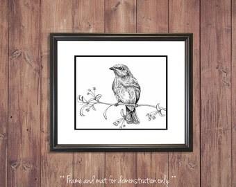 Bird Art Print from Original Drawing, Blue Bird, 4x5, 8x10