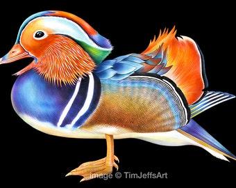 Mandarin Duck Colored Pencil Drawing