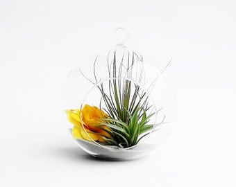 Terrarium with Air Plant // Yellow Flower Terrarium