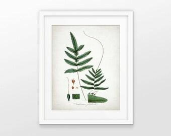 Green Plant Art Print - Green Wall Decor - Plant Art - Botanical Print - Green Leaf - Green Leaves - Single Print #1614 - INSTANT DOWNLOAD