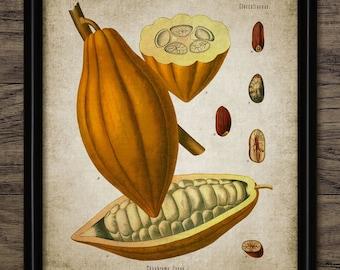 Cocoa Print - Cocoa Plant Illustration - Cocoa Bean - Cocoa Art - Digital Art - Printable Art - Single Print #28 - INSTANT DOWNLOAD