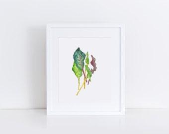 Rainbow Chard Art Print -Vegetable Watercolor Art Print - Chard Leaf Print - Kitchen Decor Wall Art - Kitchen Art - Original Art Print