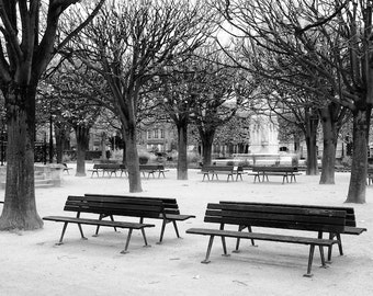 Paris black and white photography, branches, Paris park, park benches, Paris photography, black and white photo, winter, trees