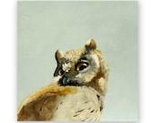 Owl - 6 x 6 Wings on Wood Decor