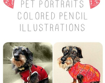 ORIGINAL hand drawn custom PET PORTRAIT drawing illustration in colored pencil sketch by Tascha