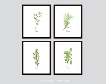 Culinary Herbs Art Prints - Kitchen Herbs Wall Art - Oregano Basil Thyme Rosemary Prints - Choose From 10 Herbs - Aldari Art