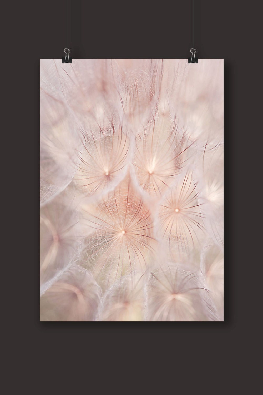 Blush pink wall art nature photography dandelion wall art for Pink wall art