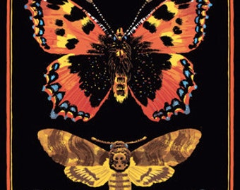 Moths Hawkmoths Butterflies Benjamin Güdel Edition Milchbuck illustration Collection Death Hawk Moth Clymene Moth insect