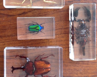 4 piece set insect collection