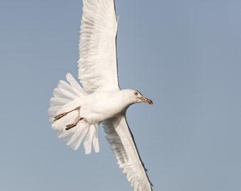Flying Seagull Photo Art, Bird Photography, Nature photography, Seagull Photography, Nature Art,