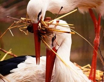 Beautiful Stork family couple, bird photography. Wall Art Decor