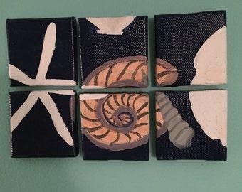 Broken Sea Shells