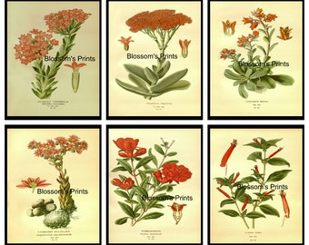 "Set of 6 Flower Prints from 1800's.  Plates 15,16,17,21,23,24   (These Prints are 8"" x 10"")"