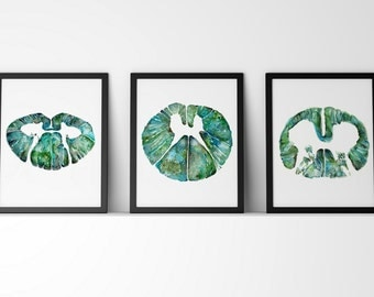 Spinal Cord Cross Section Watercolor Print Set of 3 - Abstract Anatomy Art