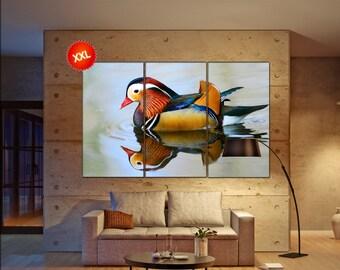 mandarin duck wall art print prints on Closeup male mandarin duck photo art work framed art artwork