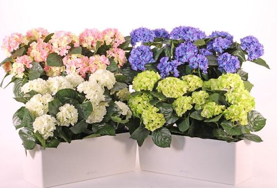 Premium quality hydrangea vintage floral sweet