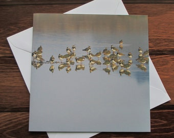 Lapwing Greetings card 14cm square