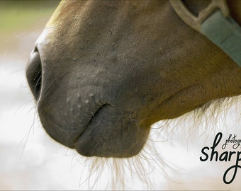 Whiskers, and a Horse