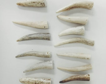 6 Fine Antler Tips Drilled Ready for Jewelry Making