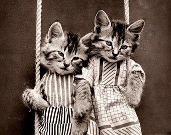 Vintage photo Antique photograph kittens on swing cats in clothing anthropomorphic kitten print cat print kitten poster cat poster pets