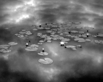 Black and White Cloudy Lily Pads Reflection