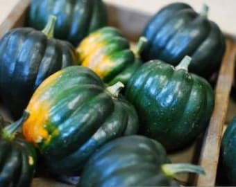 Buy 3 Get 1 Free-Heirloom Table Queen Acorn Winter Squash * 25+ Seeds