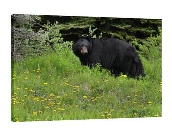 Black Bear Canvas Wall Art