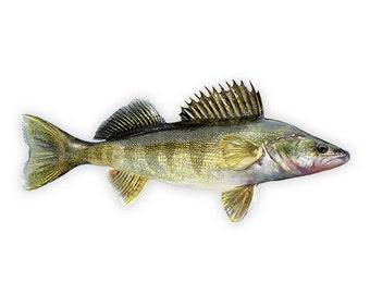 Walleye, Walleye Decal, Walleye Sticker, Walleye Fishing