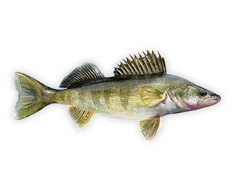 Walleye, Walleye Decal, Walleye Sticker, Walleye Fishing - **Preorder Ships July 14th**