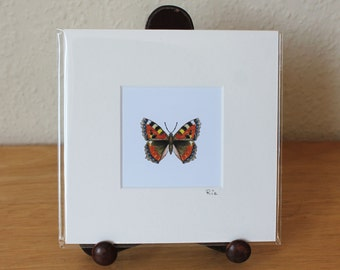 Butterfly Mounted Mini Print, Small Tortoiseshell Small Square Artwork, Insect, Nature, Wildlife, Ready for Framing (Frame not supplied).