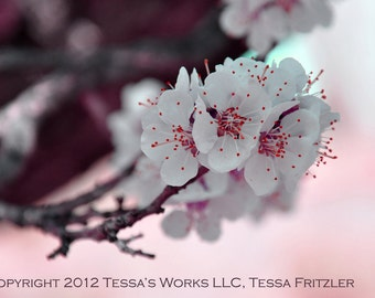 Red Apricot Blossoms 8x10 glossy print