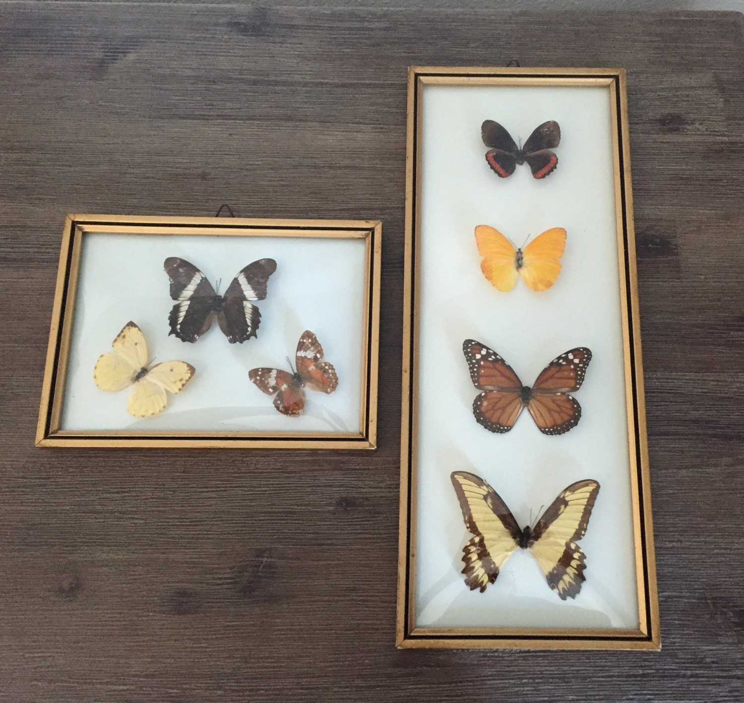 Butterfly wall art framed curved glass mounted butterflies for Butterfly wall art