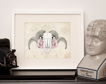 Vintage Style Ram Skull - A4 Art Print (16-V)
